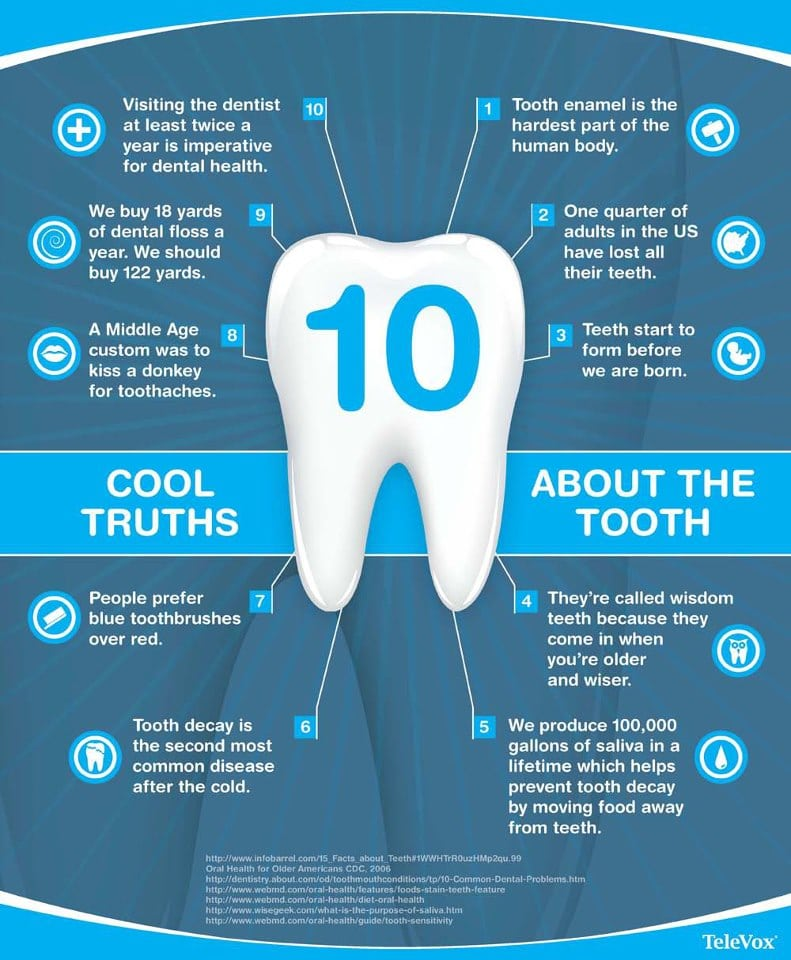 Cool truths about the tooth - image tooth-facts on https://www.foundationdental.com.au